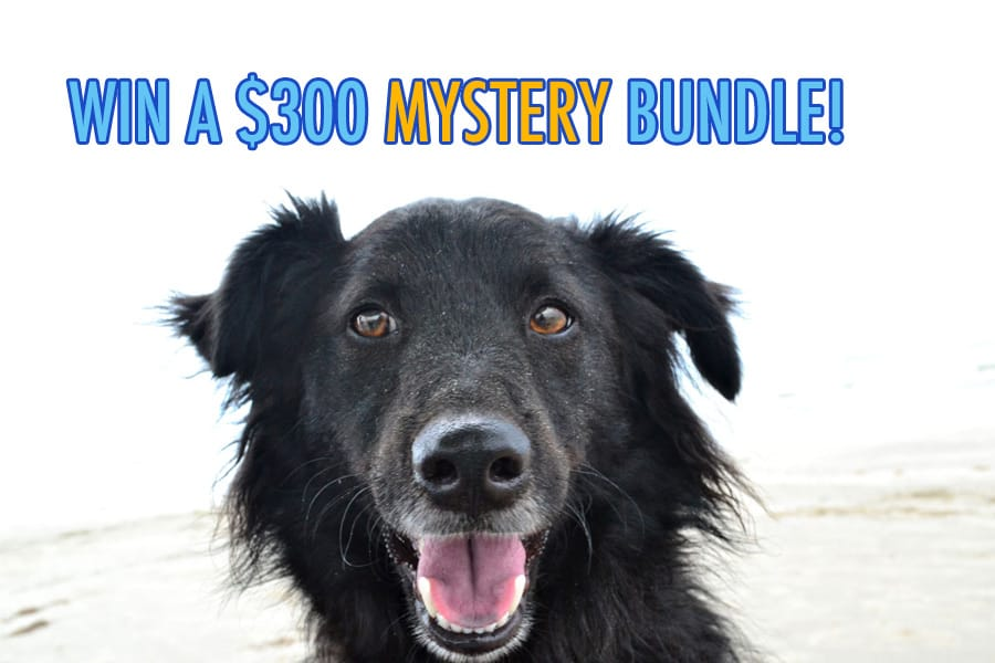 Win a $300 Mystery Bundle for Dog Lovers!