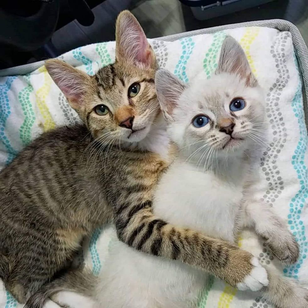 2 Rescue Kittens Hit It Off and Form Cutest Bromance – Their Journey to Forever Home