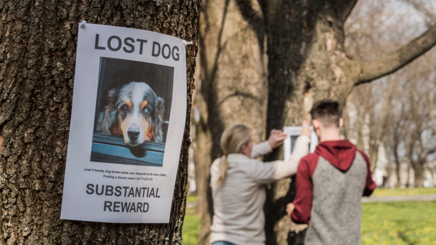 3 ways to get your community's help finding a missing pet