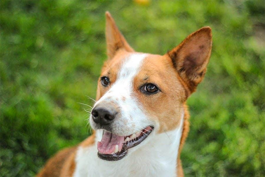 African Dog Names – 415+ Exotic, Unique Ideas for Your Pup