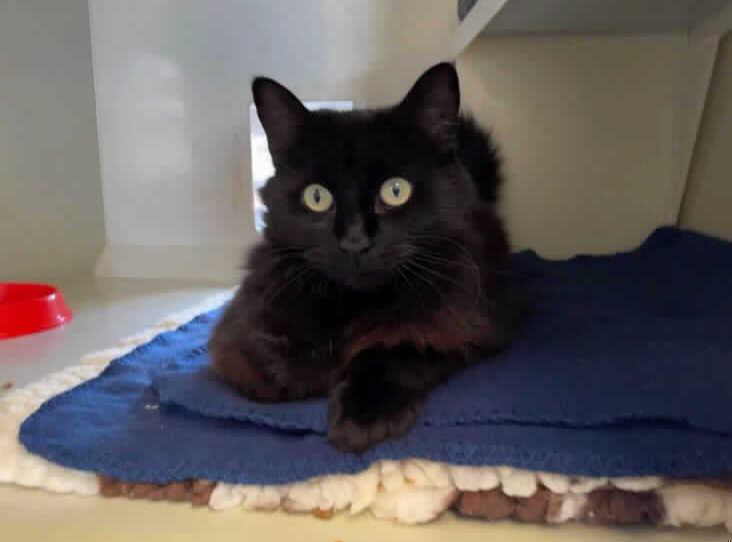 Appeal to find homes for five homeless cats at RSPCA Newport Animal Centre