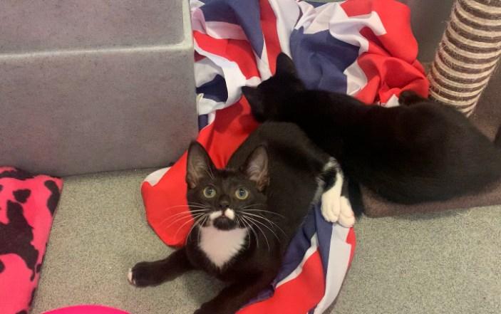 Battersea Celebrates International Cat Day With 'Purr-Lympics'