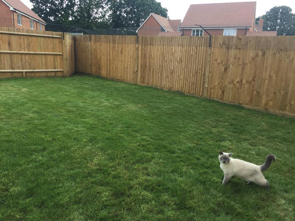 Cat Fencing for British Shorthairs