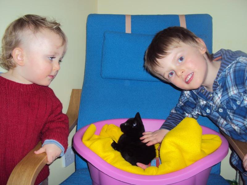 Cat is Reunited With Family After FOUR Years Thanks to Microchip