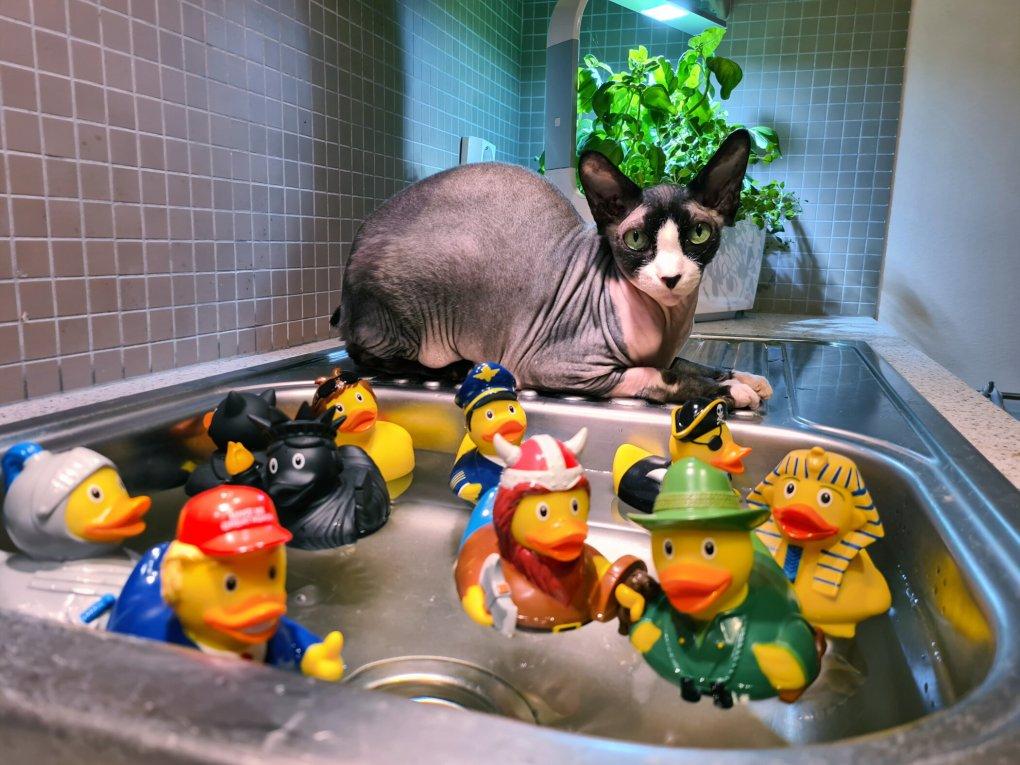 Cooper the Water Loving Sphynx Cat