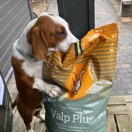 Drever Dog Diets