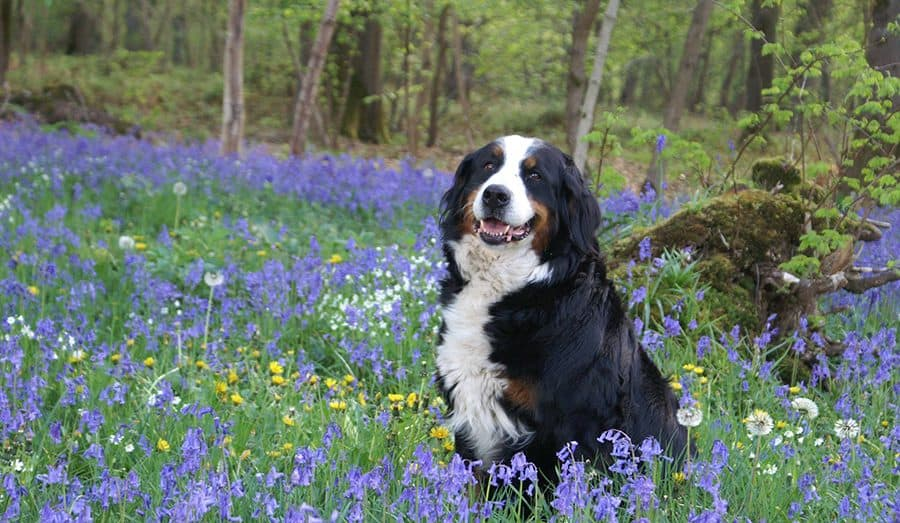 Flower Names for Dogs – 295+ Ideas