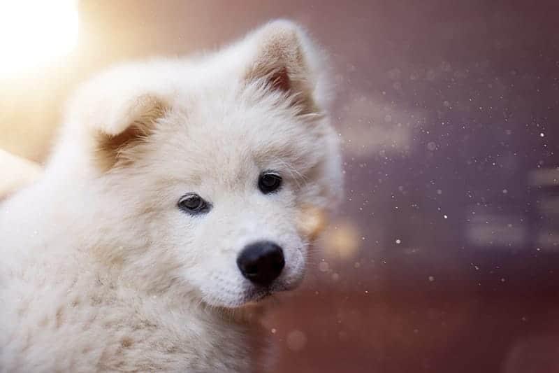 Fluffy Dog Names – 435+ Ideas We Adore