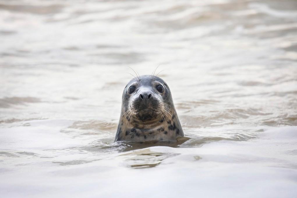 Heightened Danger to Animals This Summer as Staycation Season Gets Underway, Warns RSPCA