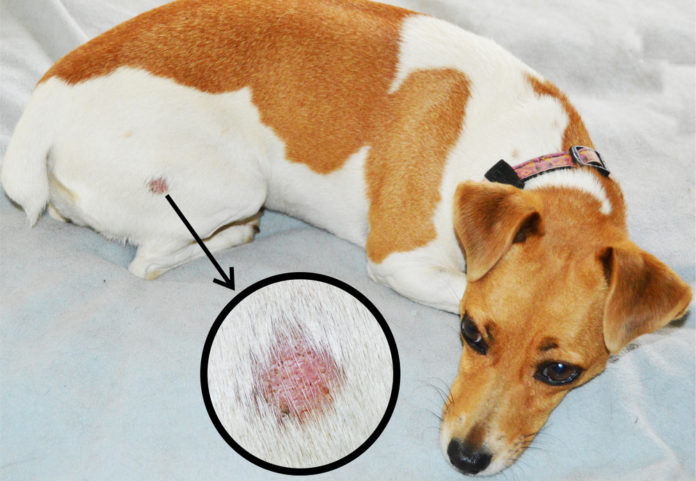How to get rid of ringworm in dogs