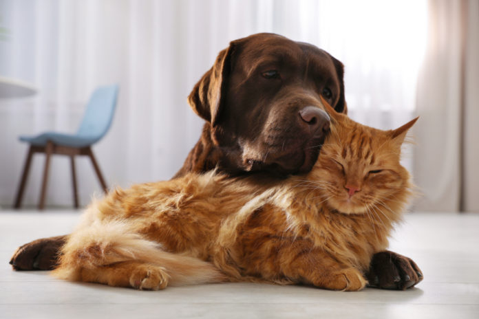 How to support your pet's gut health when they need antibiotics