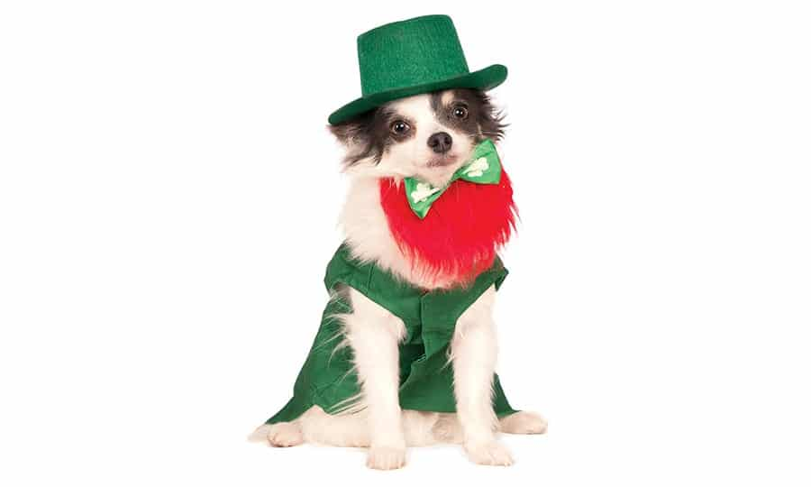 Irish Dog Names – 175+ Awesome Ideas for Your Dog