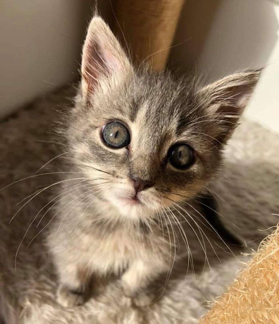 Kitten Lifts Her Back Legs and Walks Again with Her Strong Will and Help of a Couple
