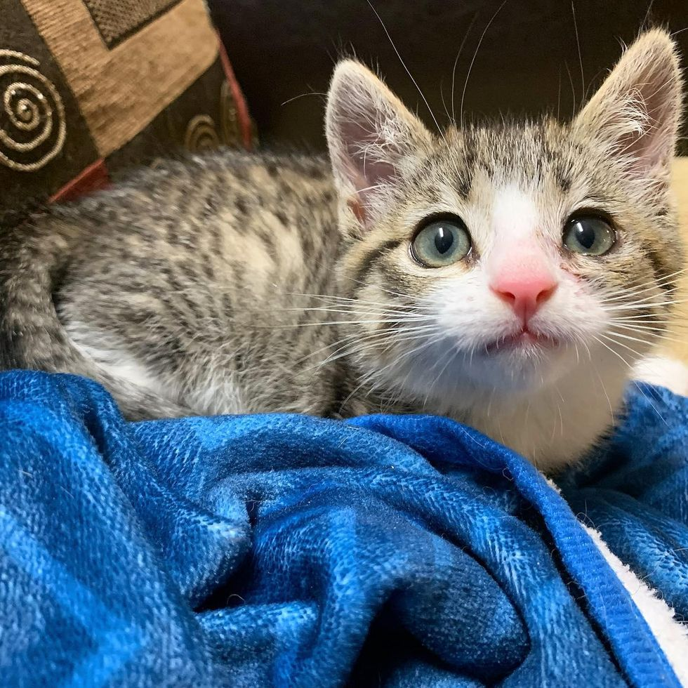 Kitten Lived as a Feral Turns Out to Be Sweet Cat Who Just Needed a Chance