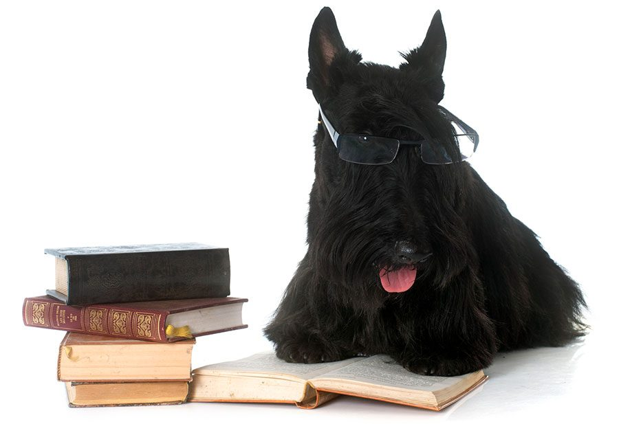 Literary Dog Names – 215+ Ideas from Books