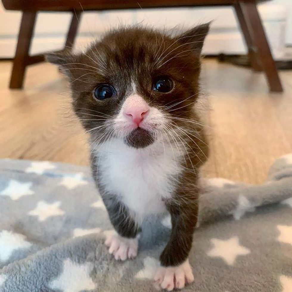Lone Kitten Found Outside So Happy to Be Helped and Turns into Dapper Tuxedo with Strong Purr