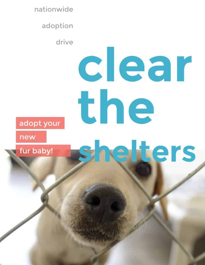 Mark Your Calendar for Clear the Shelters Adoption Drive !