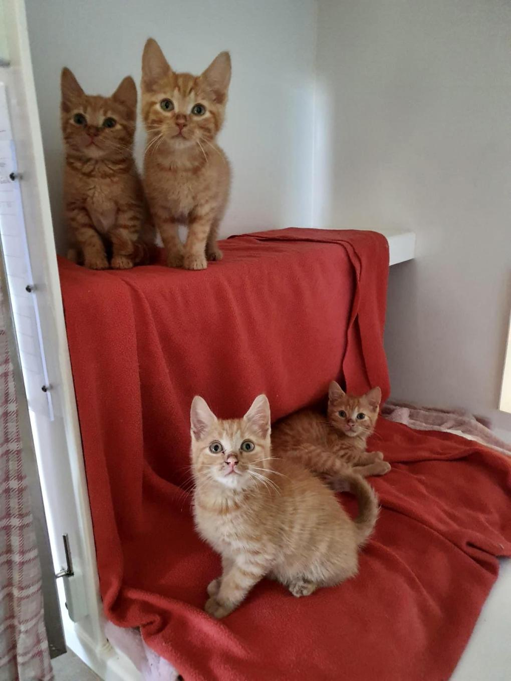 RSPCA Canterbury Branch Seeing Influx of Cats and Kittens as Lockdown has Ended