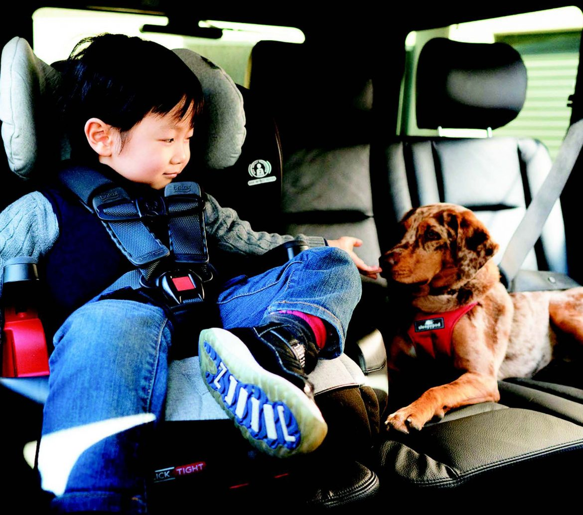 Should Your Dog Travel With You?