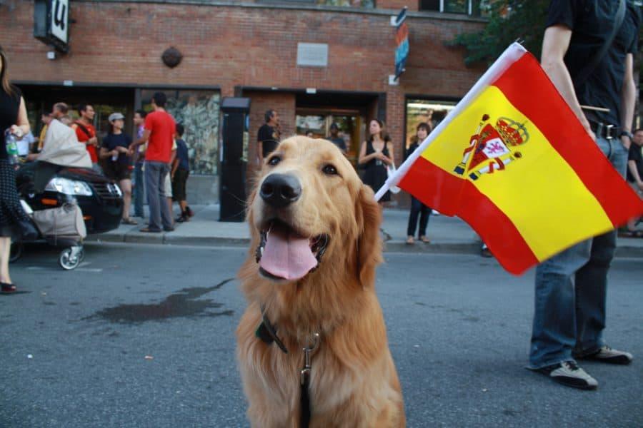 Spanish Dog Names – 315+ Awesome Spanish Names