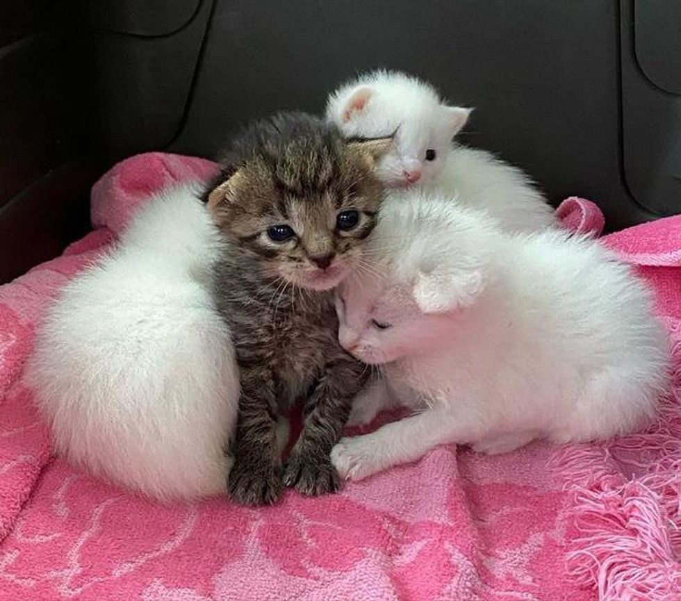 Tabby Kitten Nestles with Her Littermates Until Help Arrives, Now Living Everyday to the Fullest