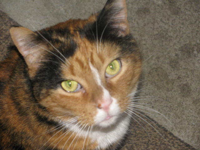 """The ARM & HAMMER Feline Generous Program and the ASPCA Award Three Cat Shelters with a total of $7,500 for the Most Heartwarming """"Senior Tails"""""""
