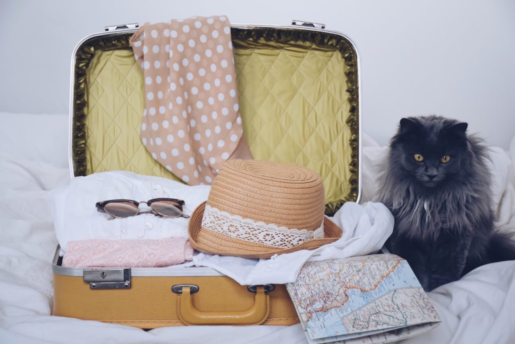 Time for a Summer Vacation? Here's How to Settle Travel Anxiety in Pets