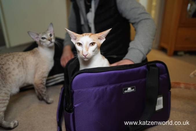 Which Sleepypod Carriers Suits you and Your Feline Companion Best?