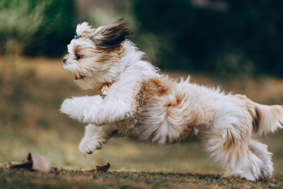 10 Things Your Dog Coat Can Tell About Their Health