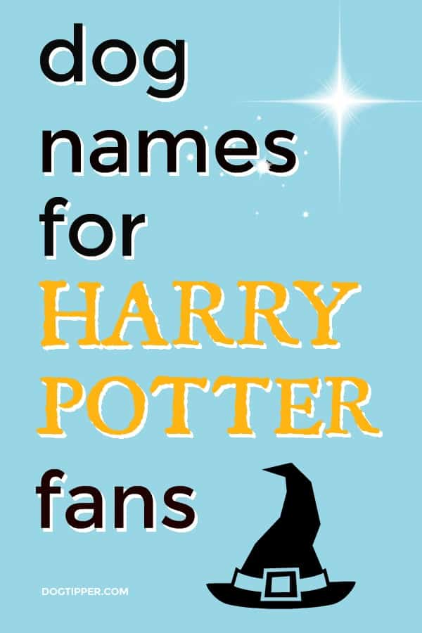 120+ Harry Potter Dog Names & Their Meanings