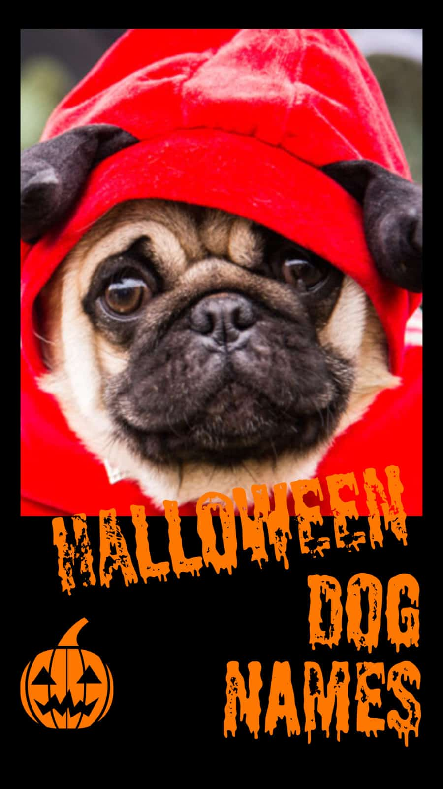 180 Halloween Dog Names