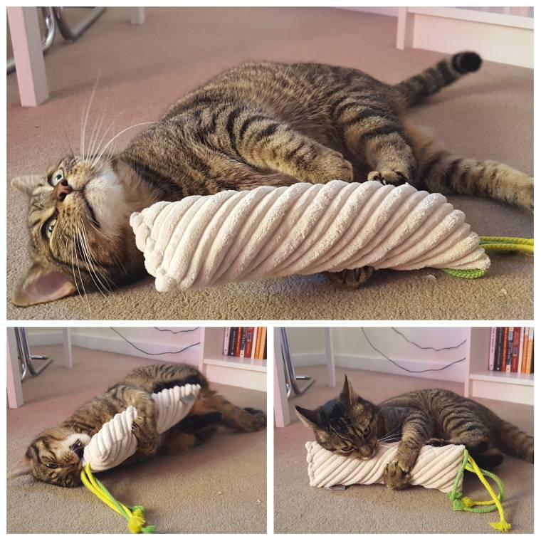 4cats Valerian Cat Toy Review by Cat Behaviour Expert Anita Kelsey