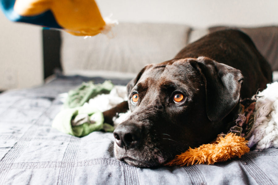 5 things you can do to ease pet anxiety