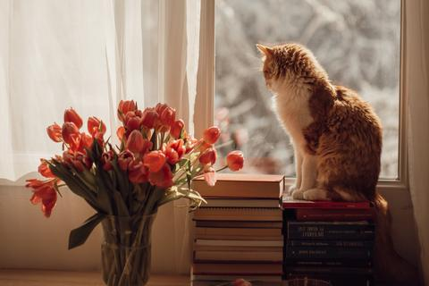6 Autumn Safety Tips for Cat Owner