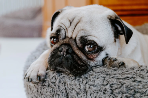 7 of 2021's Best Dog Beds Reviewed