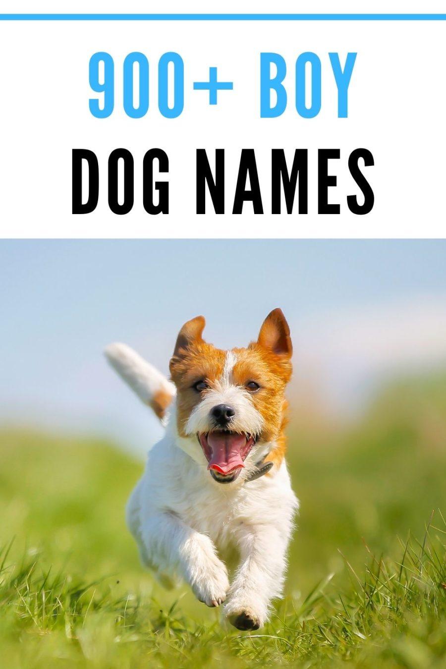 900+ Boy Dog Names for Your Good Boy