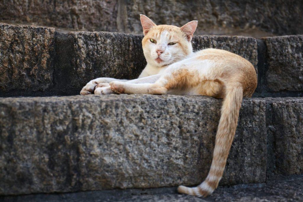 Breaking Down the Cattitude: What Your Cat's Tail is Telling You
