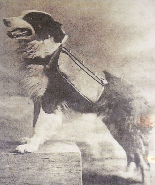Dorsey —The Mail Carrying Dog