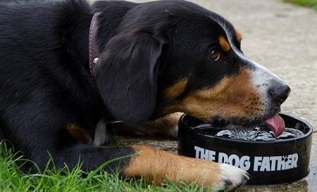 Entlebucher Mountain Dog Diets