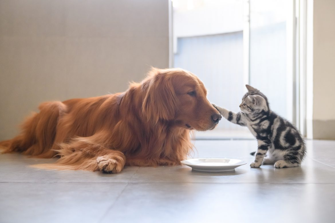 First Aid Course Launched for Pets