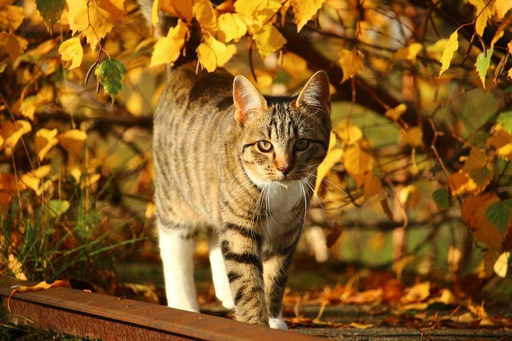 Five Toxic Autumn Plants to be Aware of if you Have Pets