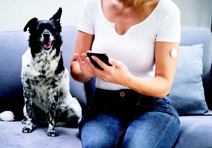 Human-Dog Diabetes Connection