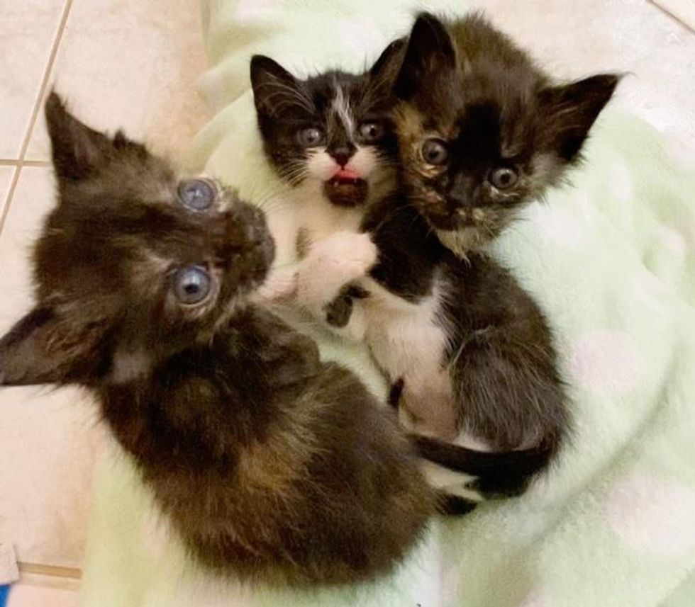 Kitten Crying Leads Family to Find Him and His Littermates in Bag and Turn Their Lives Around
