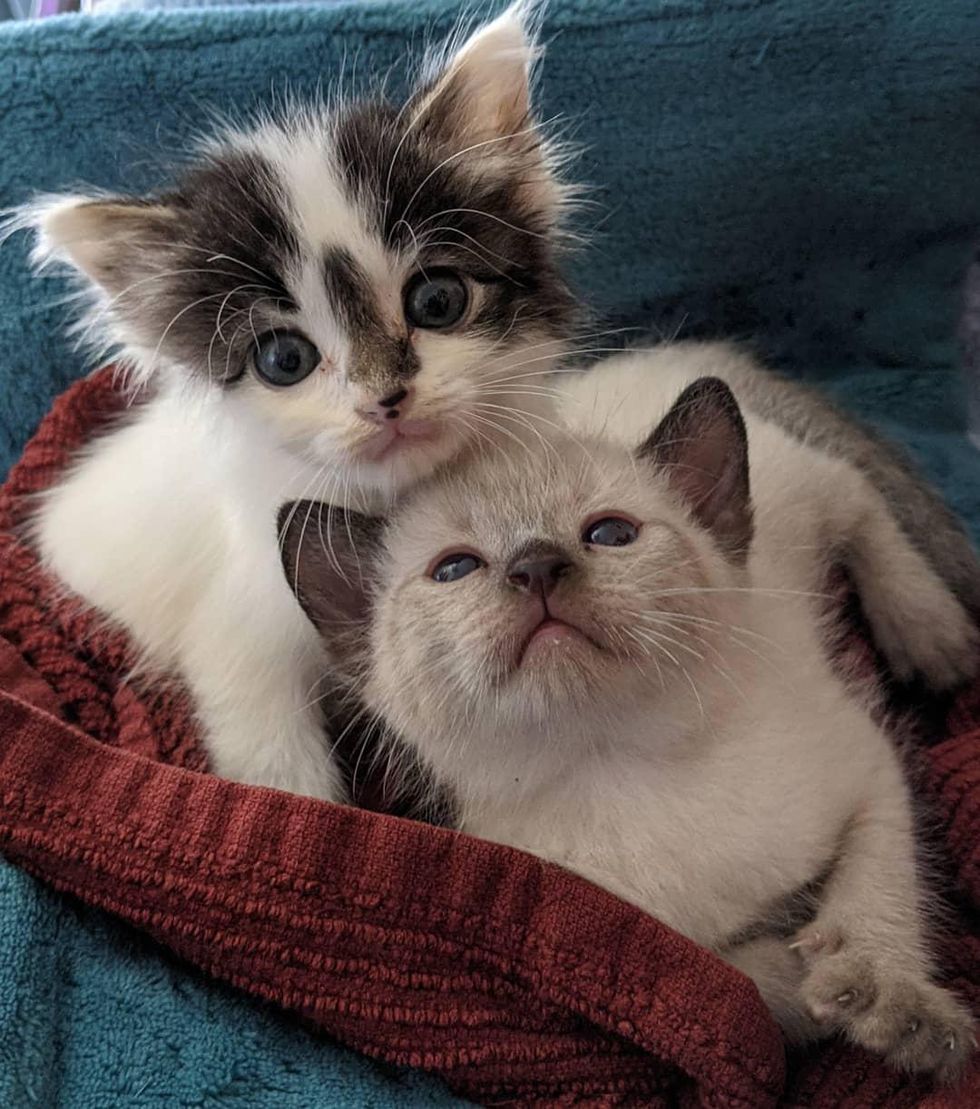 Kitten from Yard Won Over Family and Convinced Them to Adopt His Best Friend Too