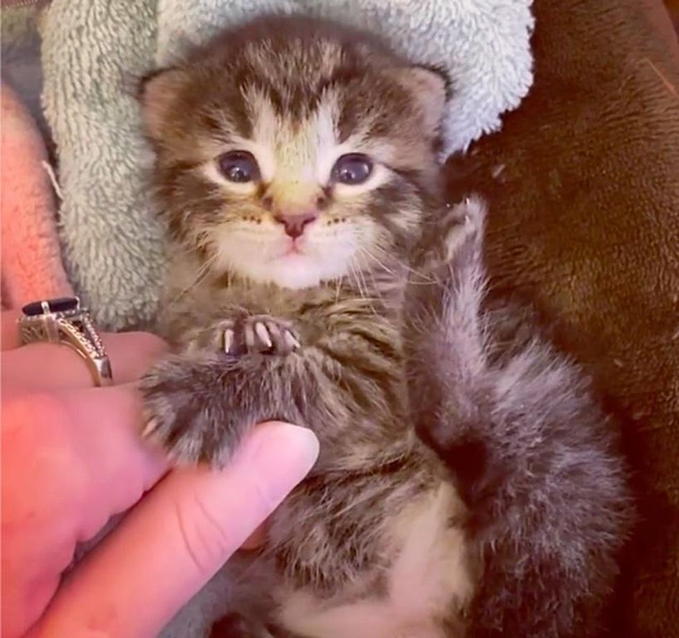 Kitten Rescued by Stunt Crew After They Searched Everywhere for Him, Now Living Full Life