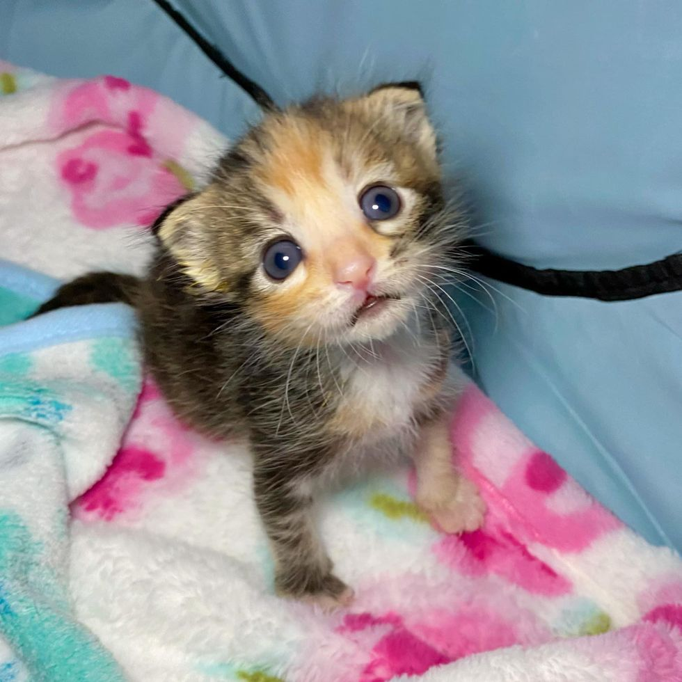 Kitten with 3 Paws Perseveres and Lives Everyday to Fullest After Being Found Near Dumpster