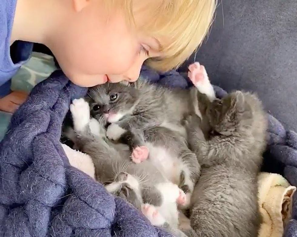 Kittens Find Cutest Little Caretaker Who Has Been with Cats Since He was Born