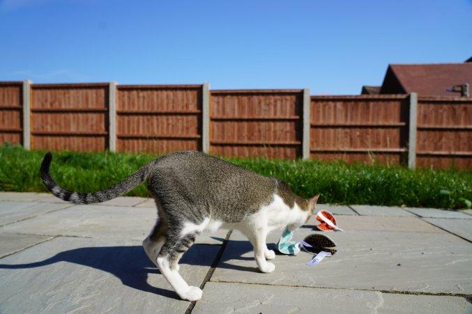 Mactavish: Is it a Melon? No it's a Fortune Cookie Cat Toy!