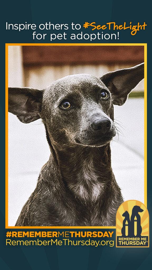 Remember Me Thursday Honors Shelter Pets–Don't Miss #RememberMeThursday Contest