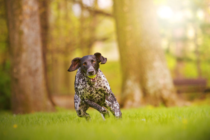 Supplements to support your dog's joints